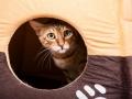 Malu-Bengals-Katze-Sally-Fleins-Wild_0007