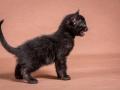 Malu-Bengals-Katzenzucht-Kitten-Galerie_0001