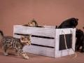 Malu-Bengals-Katzenzucht-Kitten-Galerie_0010