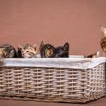 Malu Bengals Katzenzucht Blogbild 2014-07-23